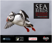 affiche expo Sea Birds web